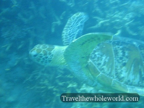 Australia-GBR-Sea-Turtle