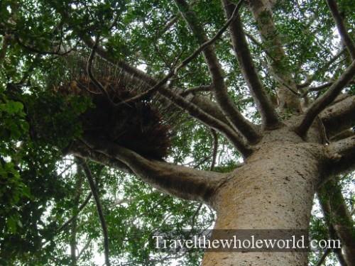 Australia-Tree-Nest