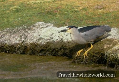 Bolivia Eduardo Abaroa Bird