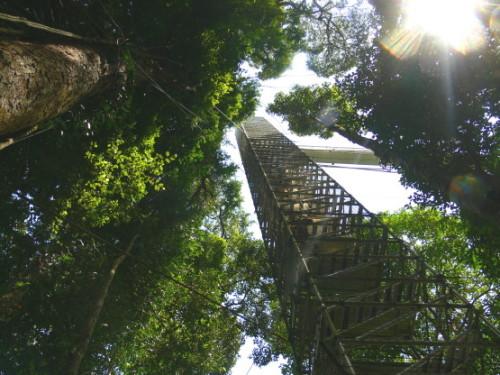 Brunei Rainforest Tower