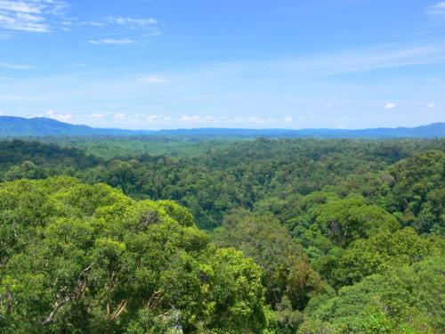 Brunei Rainforest View