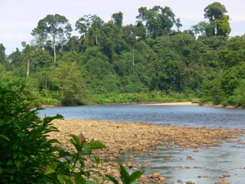 Brunei River Bend