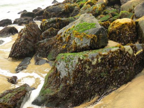 Chile Vina Del Mar Rocks