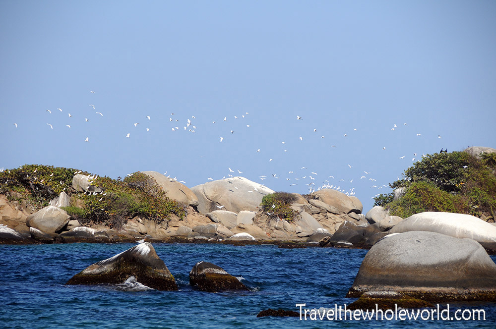 Colombia Tayrona Coastal Birds