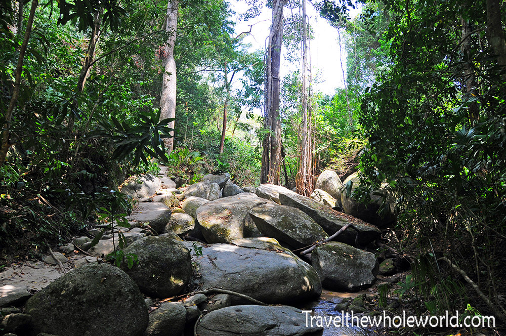 Colombia Tayrona Jungle