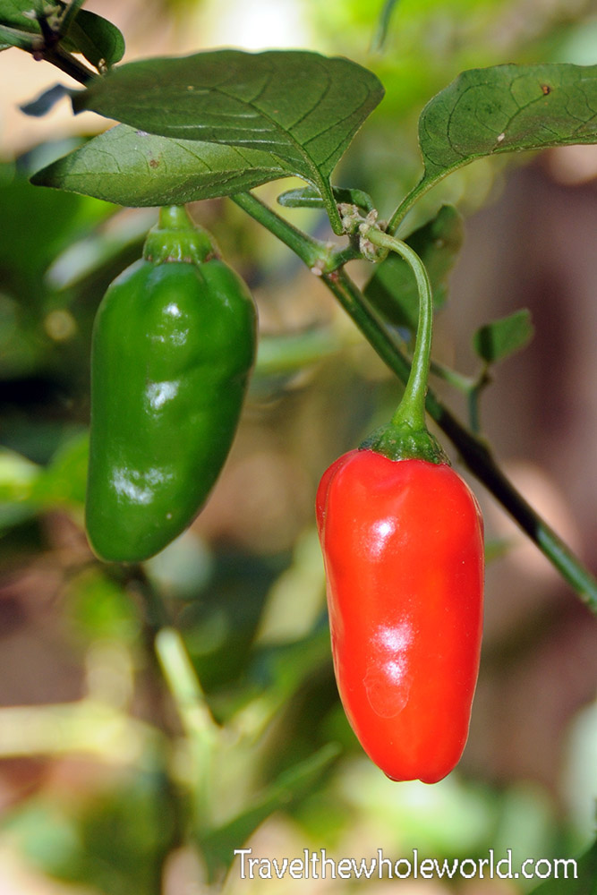 Colombia Tayrona Peppers
