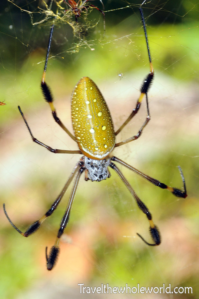 Colombia Tayrona Spider