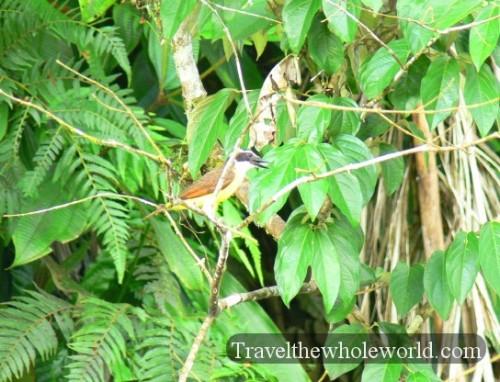 Ecuador Amazon Bird Yellow
