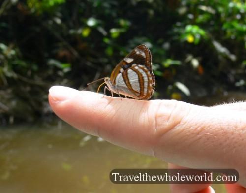 Ecuador Amazon Butterfly Hand