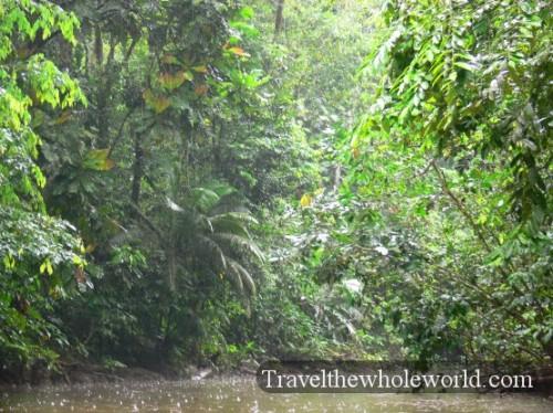 Ecuador Amazon Small River