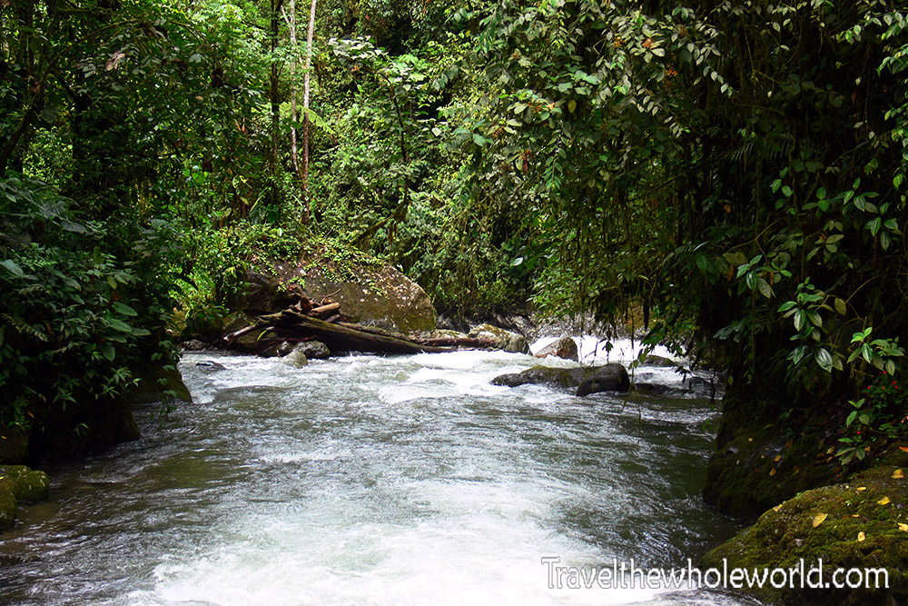 Ecuador Cloud Forest Creek