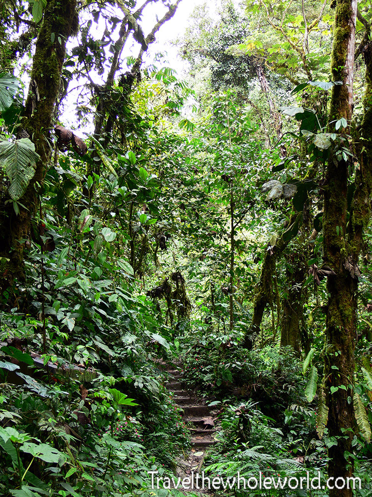 Ecuador Cloud Forest Steps