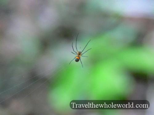 Ecuador Amazon Spider