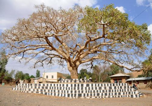 Ethiopia Axum Tree Monument