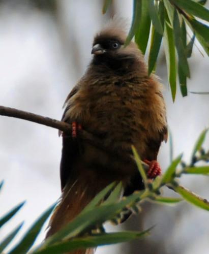 Ethiopia Bird