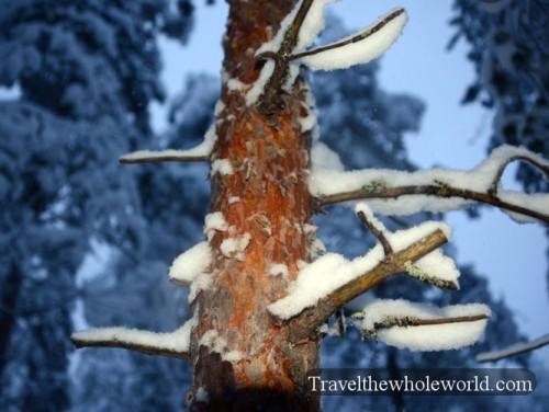 Finland Arctic Bark