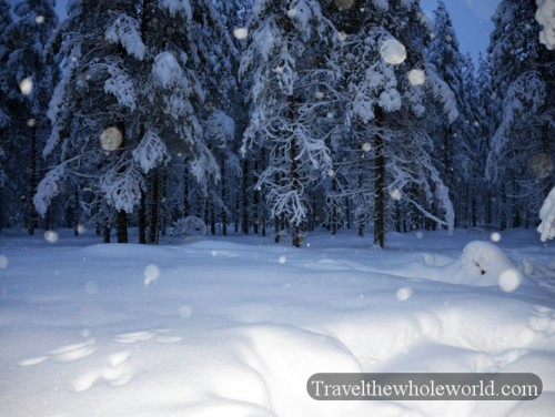 Finland Lapland Forest Snowing