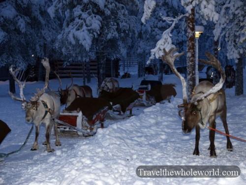 Finland Rovaniemi Reindeer Sledding