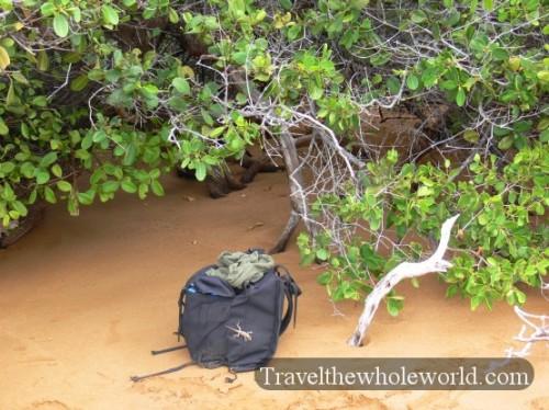 Galapagos-Backpack