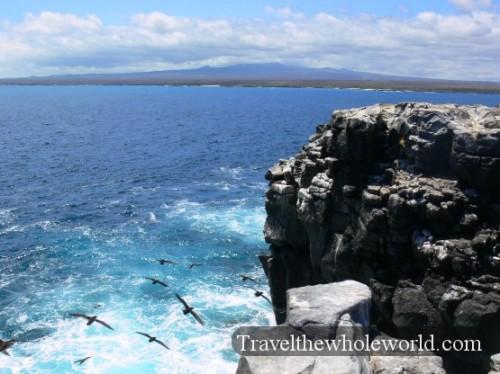 Galapagos Birds Cliff
