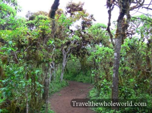 Galapagos Rainforest Path