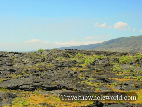 Hawaii-Lava-Grass