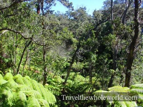 Hawaii-Rainforest
