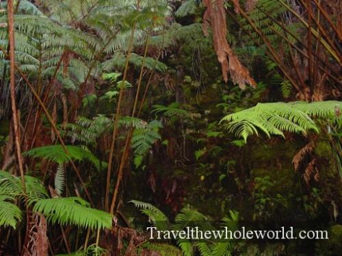 Hawaii-Rainforest2