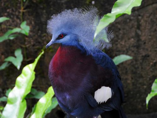 Hong Kong Park Bird Pigeon