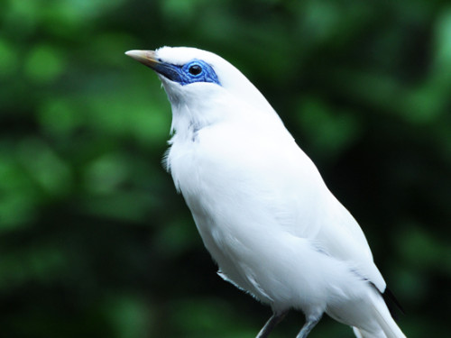 Hong Kong Park-Bird White