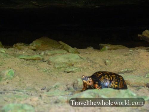 Illinois_Turtle