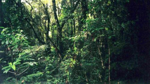 Kilimanjaro Rainforest