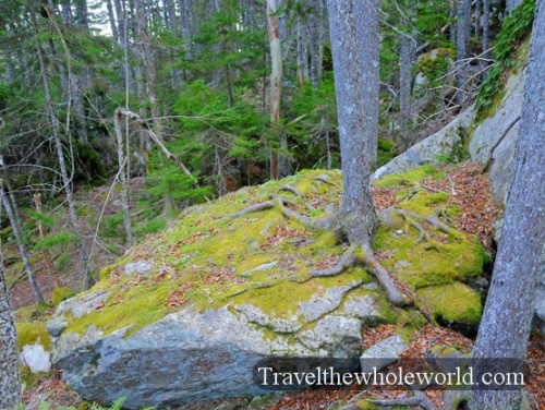 Maine-Acadia-Tree-Rock