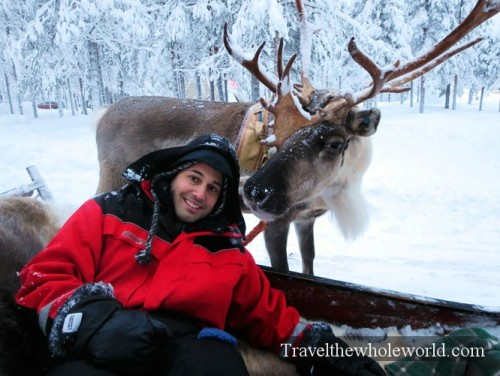 George Kashouh Reindeer