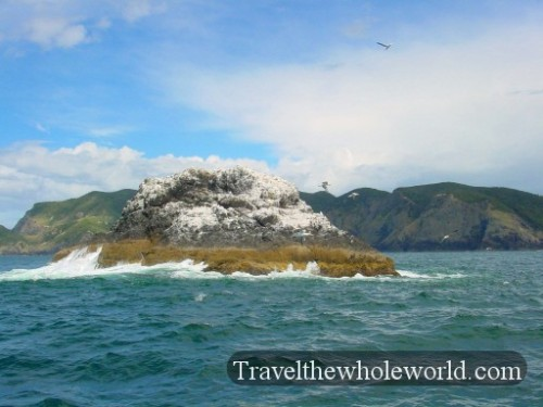 New-Zealand-Bay-Of-Islands-Seagull-Island