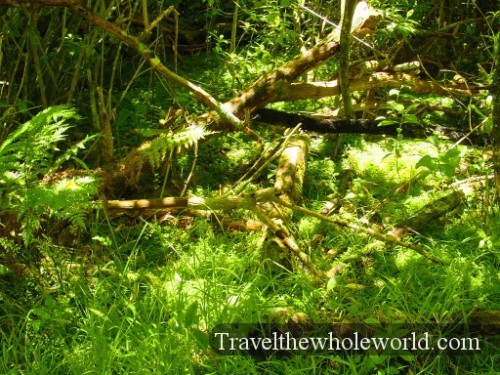 New-Zealand-Kiwi-Habitat