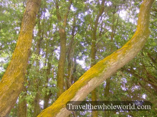 New-Zealand-Orange-Moss