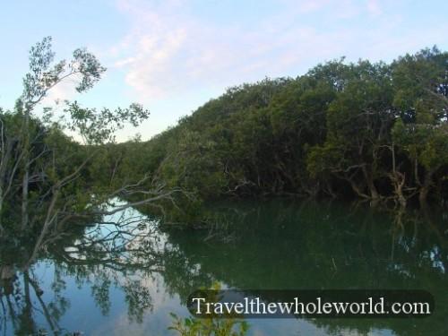 New-Zealand-Swamp