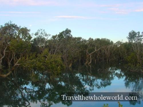 New-Zealand-Swamp2