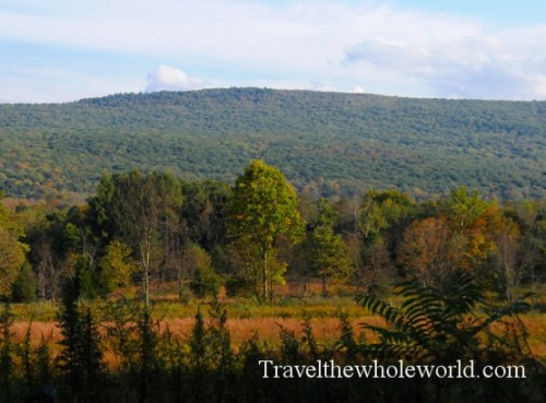 New_Jersey_Delaware_Gap_Forest