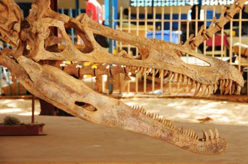 Niger Niamey Museum Dinosaur