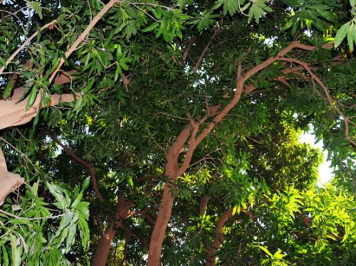 Niger River Green