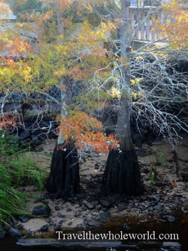 North Carolina Wilmington Trees