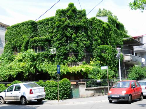 Romania Bucharest House Ivy