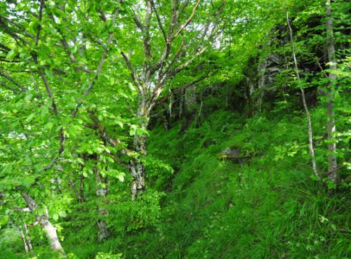 Romania Translyvania Forest