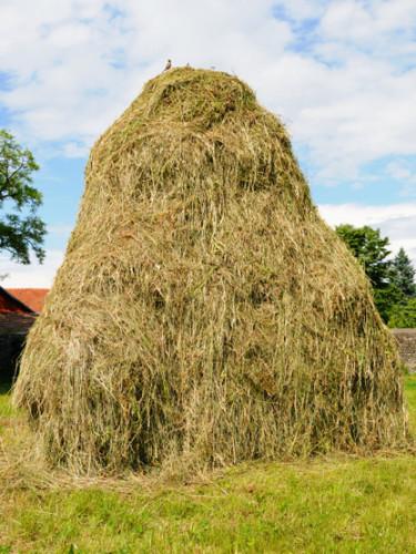 Romania Village Hay