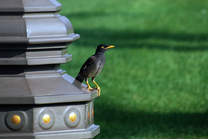 UAE Abu Dhabi Bird