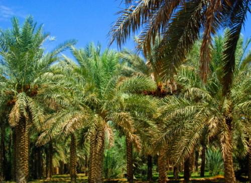 UAE Al Ain Oasis