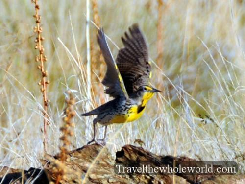 Utah Salt Lake Antelope Island Bird