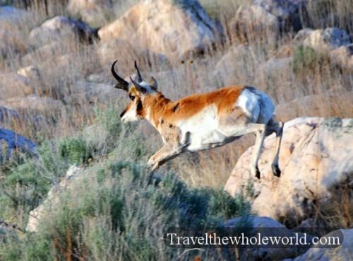 Utah Salt Lake Antelope Island Running